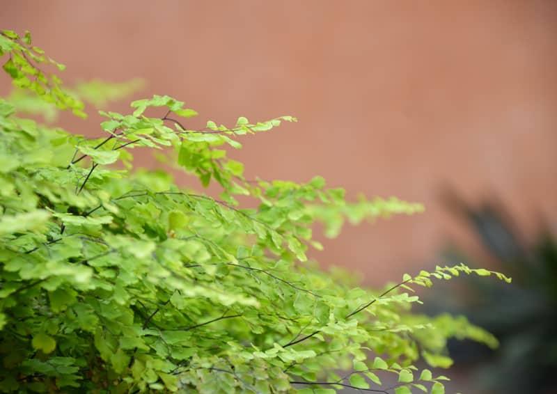 3 consigli ecologici per te che abiti in città